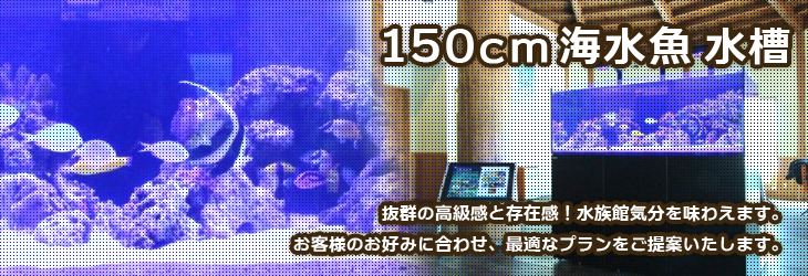 150cm以上の大型海水魚水槽をレンタルできる神奈川アクアガーデン