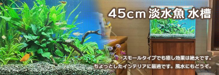 45cm 小型淡水魚水槽レンタル