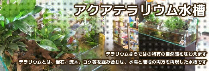 アクアテラリウムもレンタルできます!水槽レンタルサービスの神奈川アクアガーデン