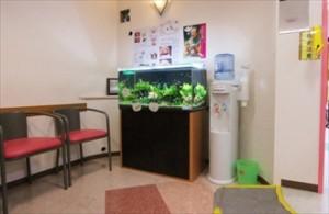 横浜市 歯科医院様 淡水アクアリウムで癒しを