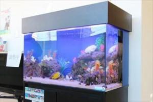 横浜 診療所様 色彩豊かなレイアウト水槽です!