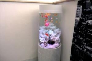 シクリッドのピンクが暖かい円柱水槽!