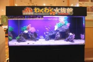 川崎市 飲食店様 にぎやかな水族館水槽!