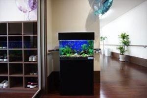 介護施設の玄関では熱帯魚がお出迎え!