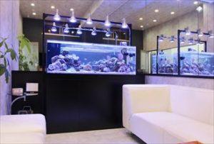 川崎市内 サンゴ水槽で印象的なオフィスを演出