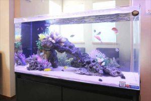 川崎市内 オフィスに90cm海水魚水槽