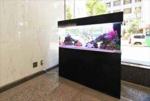 横浜市内 オフィスビルに海水120cm水槽