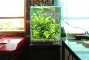 横浜市内 オフィス事務所に30cm淡水魚水槽