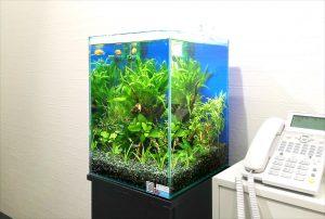 横浜市内 企業事務所にお試し水槽設置