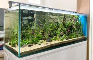 個人宅に川の環境を再現した120cm淡水魚水槽