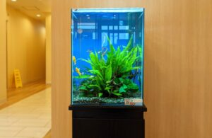 綾瀬市内 クリニックに淡水魚水槽を設置