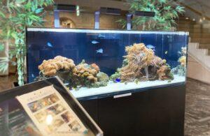 企業施設に涼し気な150cm海水魚水槽