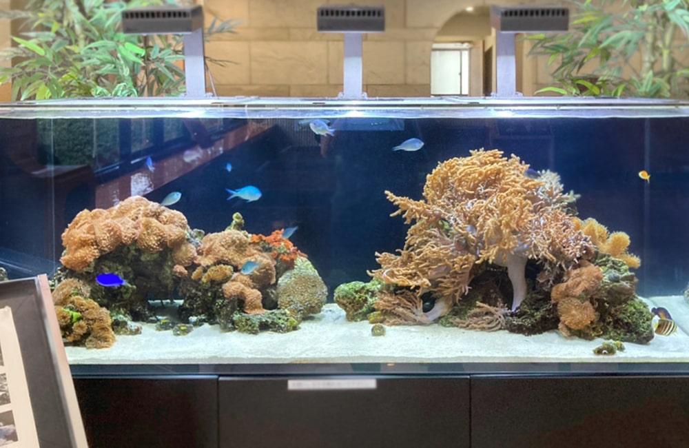 サンゴ海水魚水槽