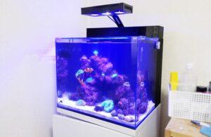 横浜市内 ご自宅の海水魚水槽をメンテナンス
